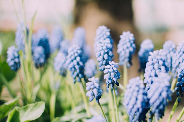 zastosowanie aromaterapii w alergii