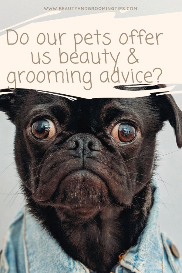 a well-groomed doggie