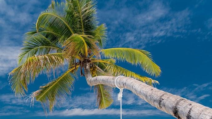 Palmeira, Praia, Tropical, Mar, Verão