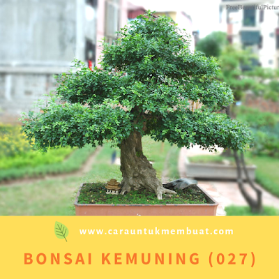 Bonsai Kemuning (027)