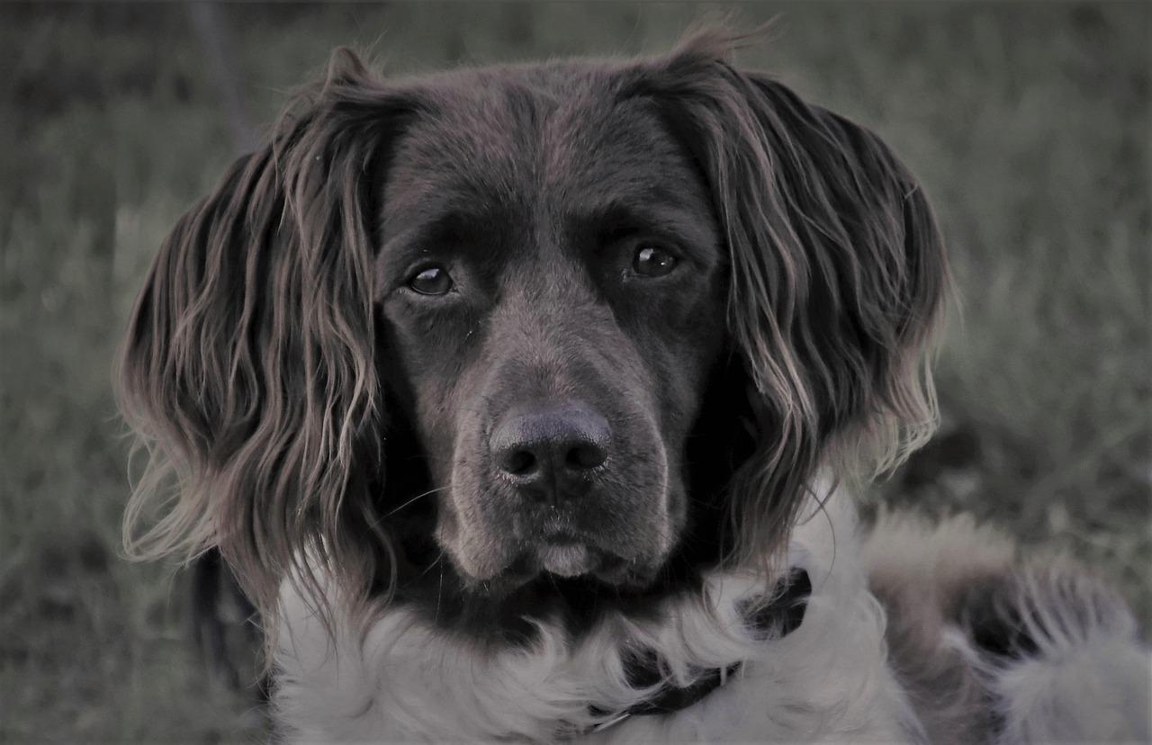 Comment gérer l'anxiété chez les chiens?