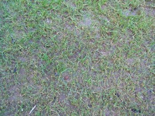 compacted soil in lawn