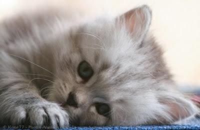 image de chaton trop mignon a imprimer