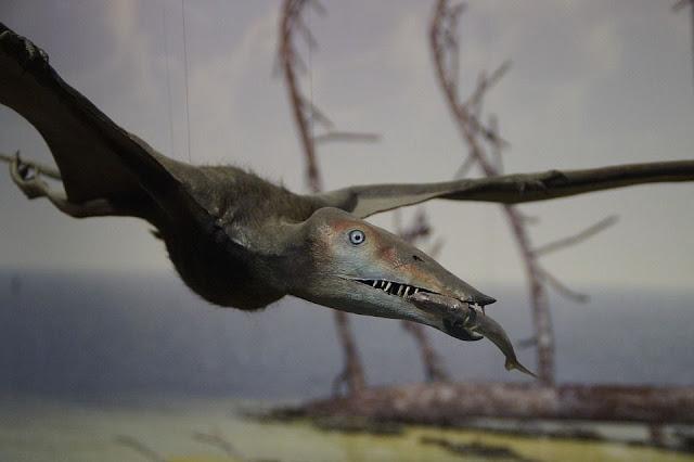 تيروصور,pterosaurs،طيور عملاقة،زواحف مجنحة،ديناصورات،مشاهدات التيروصورات