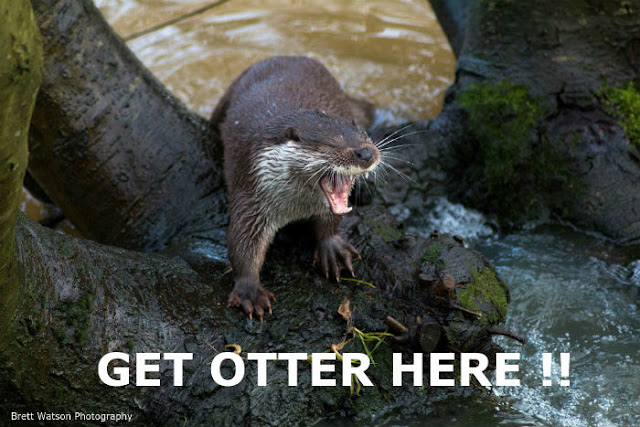 Funny Get Otter Here Pun Joke Picture