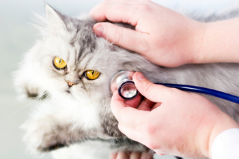 Cat Pain Relief Therapy