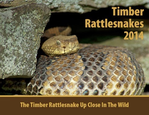 2014 Timber Rattlesnake calendars are now avialable. Don't miss out!!!