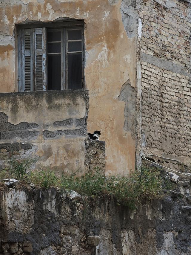 Kreta: katten en honden