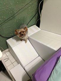 cães micro em rampas