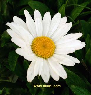 bunga cantik