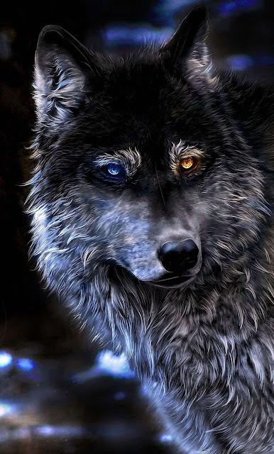 iphone wolf wallpaper
