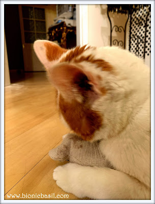 Feline Fiction on Fridays #116 at Amber's Library ©BionicBasil®Amber meets Karl