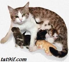 فترات الحمل عند الحيوانات
