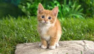 معنى حلم دخول القط للمنزل