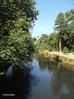 Avon River flows through the Christchurch Botanic Gardens - New Zealand