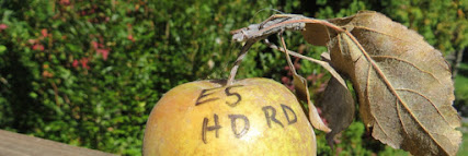 "Top of an apple, including stem and leaves, with ""E5 HD RD"" written on the peal."