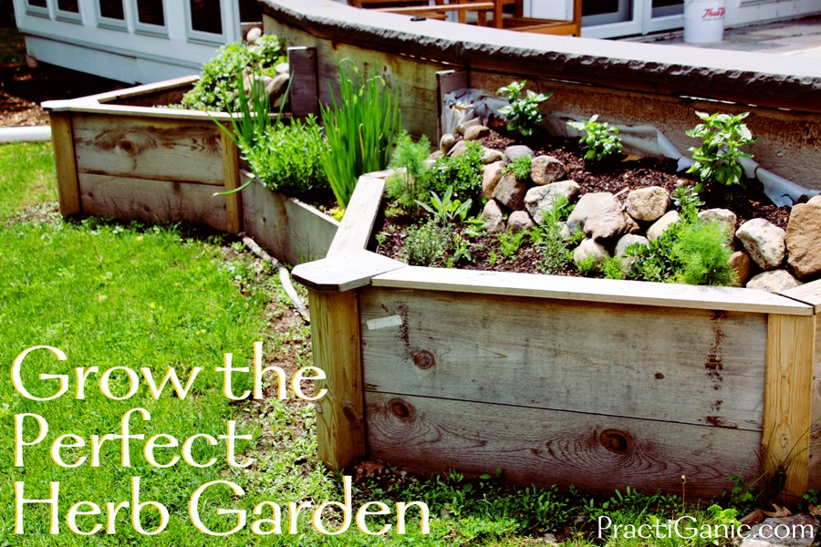 Grow the Perfect Herb Garden