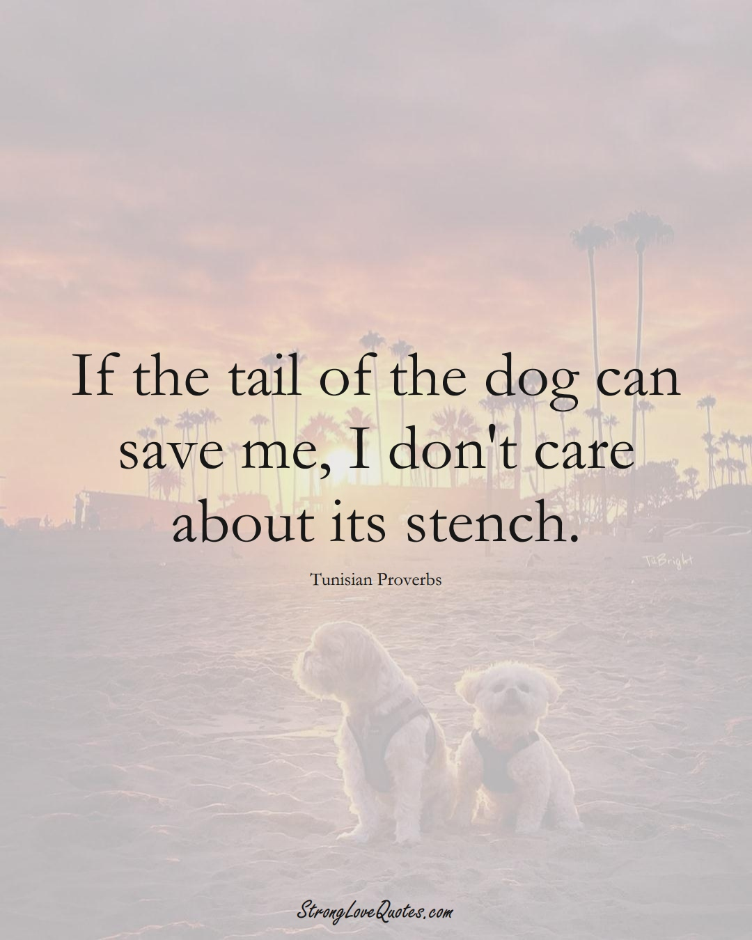 If the tail of the dog can save me, I don't care about its stench. (Tunisian Sayings);  #AfricanSayings