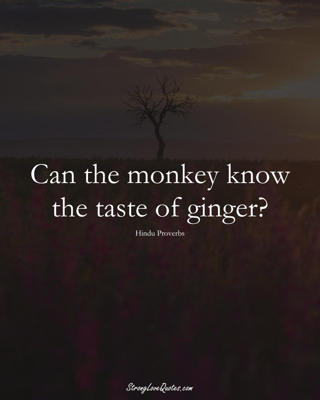Can the monkey know the taste of ginger? (Hindu Sayings);  #aVarietyofCulturesSayings