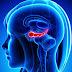 Día Mundial del Alzheimer Se Celebra este 21 De Septiembre