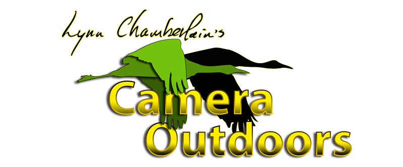 "Lynn Chamberlain's  ""Camera Outdoors"""