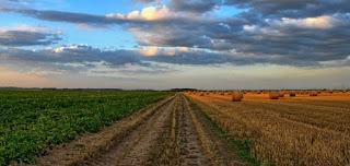 Tarımda Verimi Etkileyen Faktörler