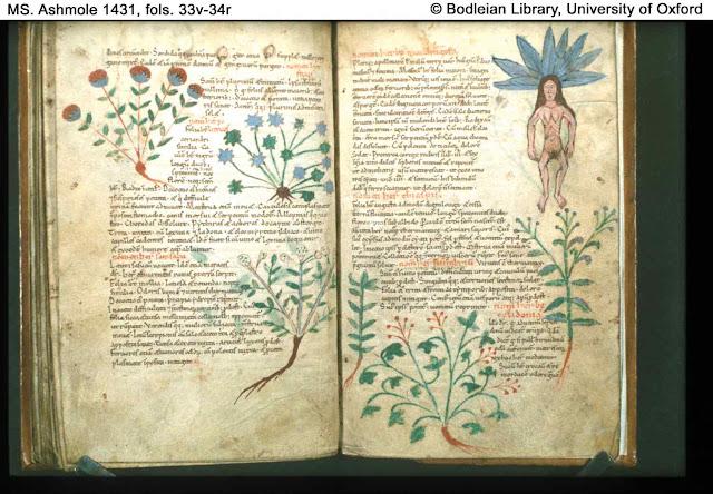 Herbarium de Apuleius Platonicus