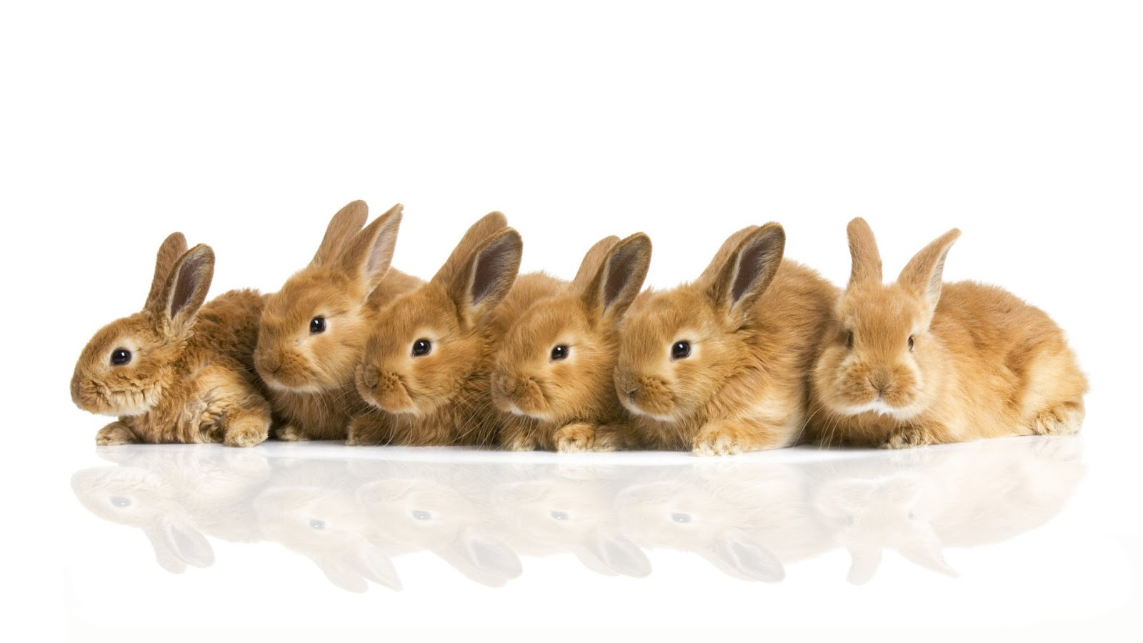 cute rabbit wallpaper - photo #22
