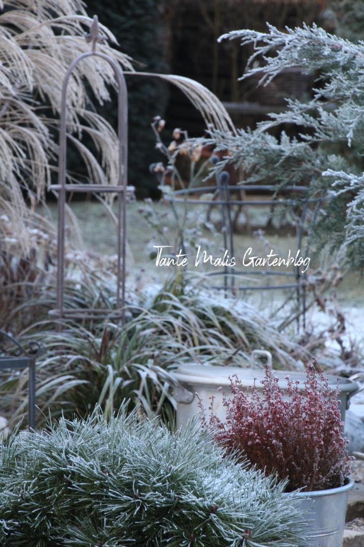 Gartenbeet im Winter mit Frost