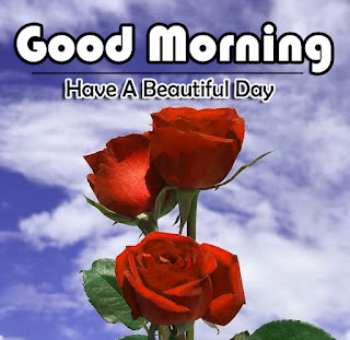 New Good Morning 4k Full HD Images Download For Daily%2B60