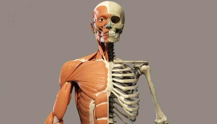 शरीर की सबसे छोटी और बड़ी हड्डी कौनसी है