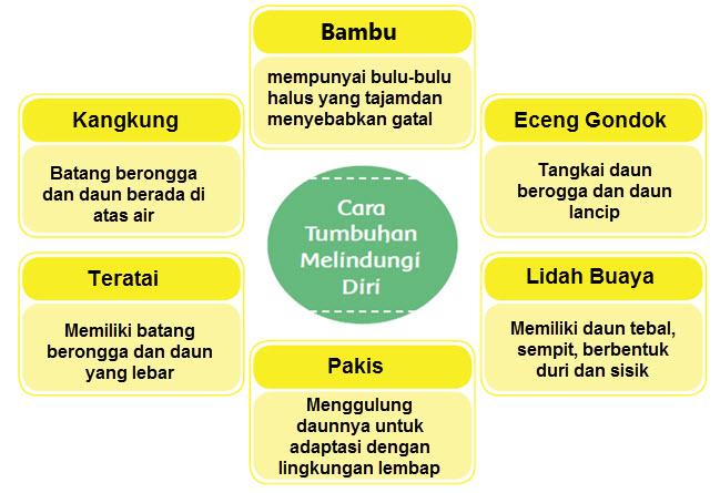 Diagram Frayer Ciri Khusus Tumbuhan