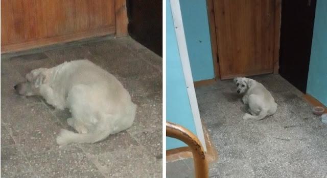 Верная собака не отходила от опечатанной квартиры ушедшей из жизни хозяйки