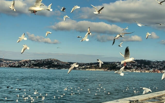 martılar deniz İstanbul