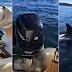 Vídeo impressionante mostra foca subindo em barco para escapar de ataque de baleias