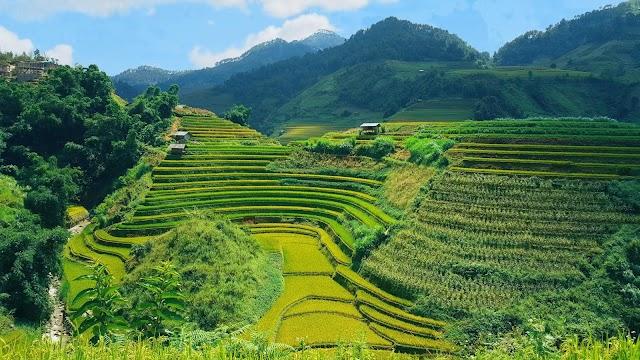 Symphony of golden season on the highland of Mu Cang Chai