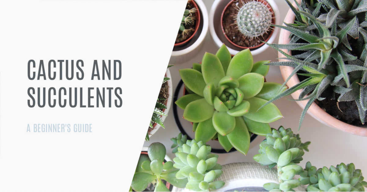 BEGINNERS GUIDE TO CACTUS AND SUCCULENTS