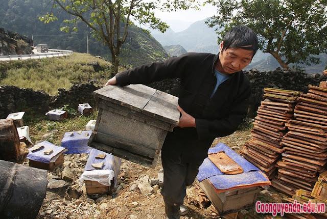 """""""Người nuôi ong phải sống kiểu du mục, trong năm liên tục di chuyển các đàn ong đến vùng có hoa nở. Mỗi mùa lại cắm nhà bạt tại chỗ để thu hoạch mật"""","""
