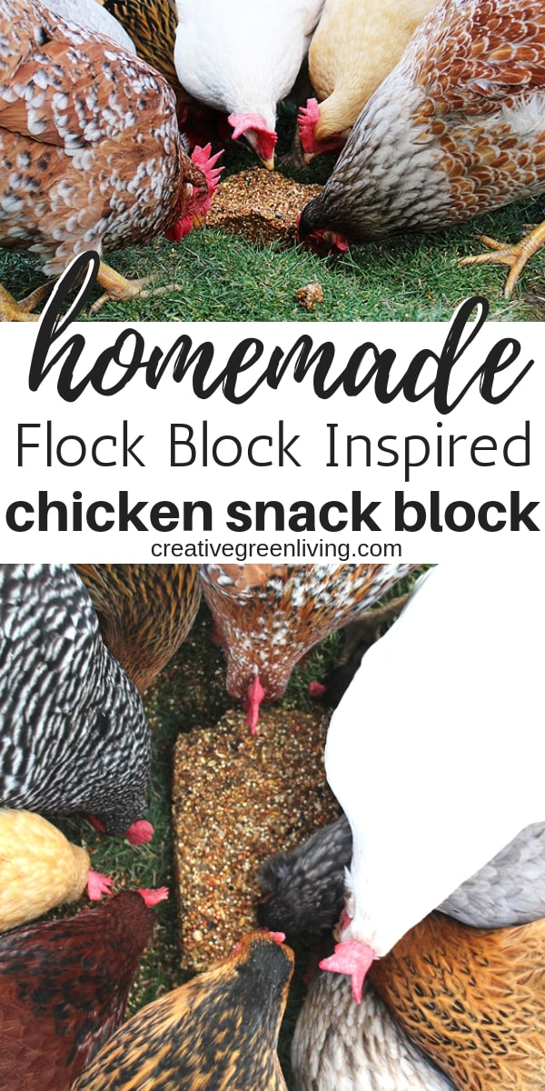 How to make a DIY flock block for chickens - An easy recipe for winter treats or feeding all year long! These homemade chicken treats are the perfect way to spoil your backyard hens with safe foods and grains. #creativegreenliving #chickenkeeping #chickentreats #chickensnacks