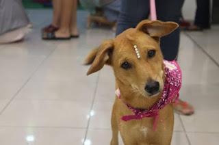 Center Shopping Rio promove 4ª edição da 'Campanha de Adoção de Cães e Gatos'