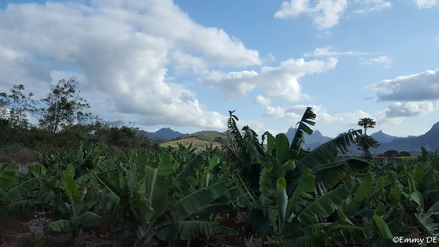 Mauritius by ©Emmy DE