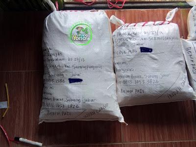 Benih Padi Pesanan YAYAT RUHIYAT Subang, Jabar.   Benih Sesudah di Packing