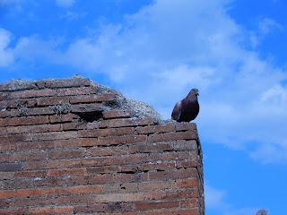 ポンペイ遺跡 鳩のいる風景