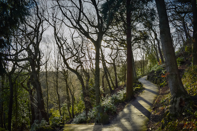 Beaumont Park - tree lined winding paths