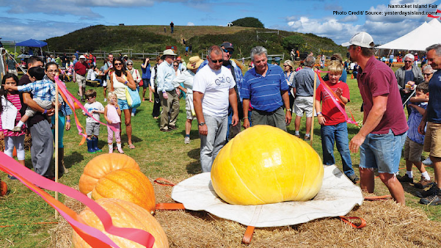 comparing giant pumpkins for fair-goers