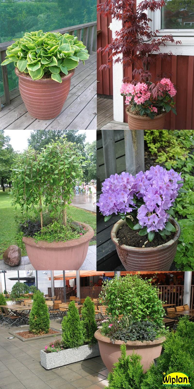 Sol och grönt: trädgårdsfint till skolavslutningen