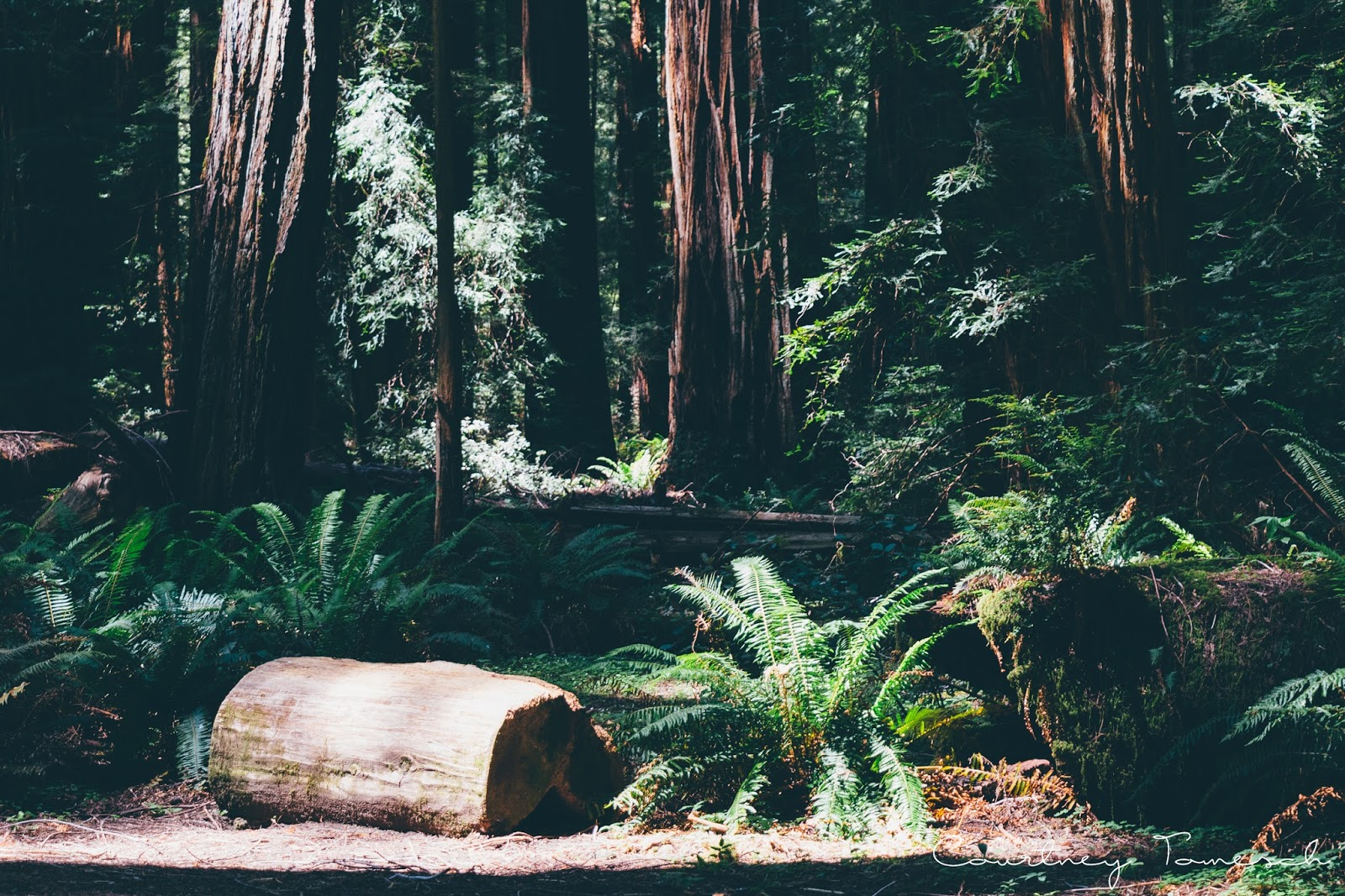 Courtney Tomesch Adventure to the Redwoods