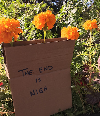 """Marigold flowers with sandwich board """"the end is nigh"""" sign."""