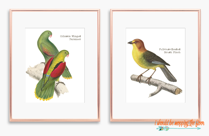 Finch Printables