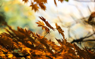 dry brown leaves widescreen resolution hd wallpaper